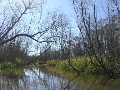 aswamp