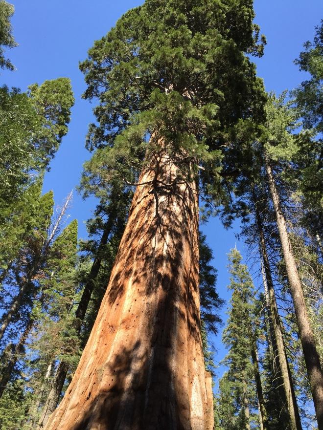xsequoia