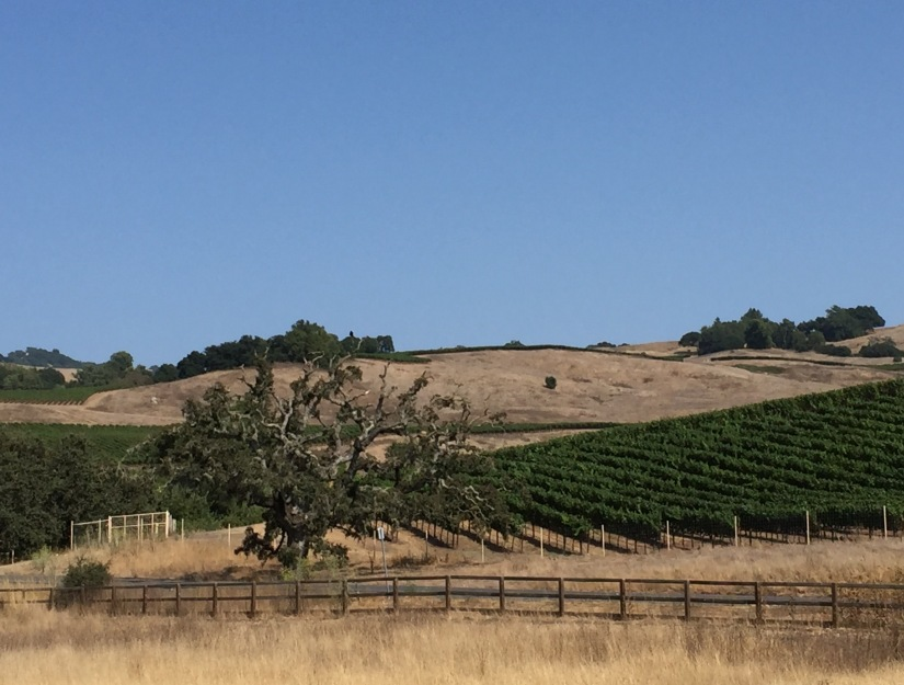 Penngrove, California 8/25 –9/15